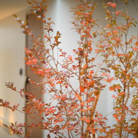 札幌市白石区モデルハウスで秋のウッドデッキの撮影
