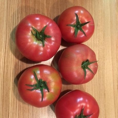 トマトを頂きました!