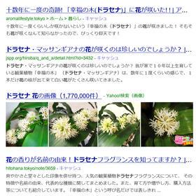 モデルハウス×新築×観葉植物
