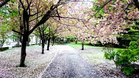 桜の開花が待ち遠しいです。(^^;