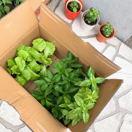 今年の我が家の家庭菜園は