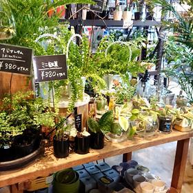 札幌市『 ご新築 × 観葉植物 』(^^)