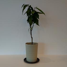 札幌市ご新築 ( リビング + カフェテラス ) × 観葉植物。(^^)/