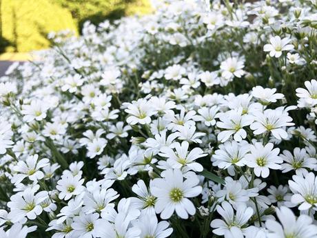 ガーデニング × お庭に知らない木や花が育ってたら?