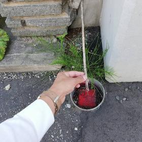 A様邸現地調査☆