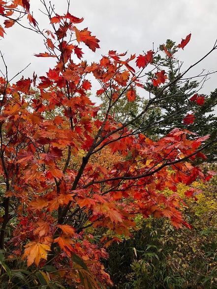 秋の到来ですね(*'▽')