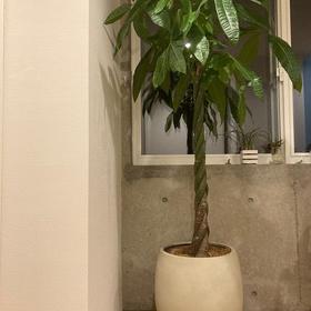 【自宅】観葉植物